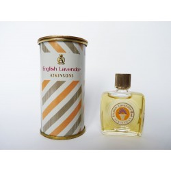 Miniature English Lavender de Atkinsons