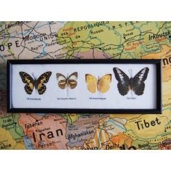 Cadre aux papillons