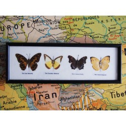 Cadre de papillons